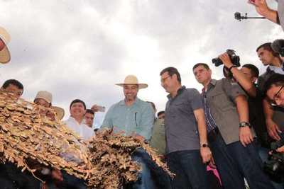 Sembraron 50 mil hectáreas de sésamo a nivel país. Comenzó periodo de cosecha