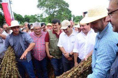 Inició cosecha de sésamo campaña 2019-2020