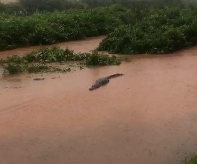 Piden tomar precaución por desborde del Lago de la República