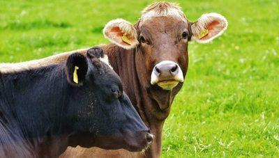 Ganaderos del Mercosur molestos por pedido de la ONU sobre consumir menos carne