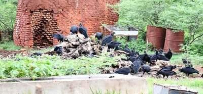 Mades intervino 3 mataderías por infringir medidas ambientales •