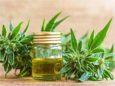 Ampliarán a 10 las licencias para producción de cannabis medicinal