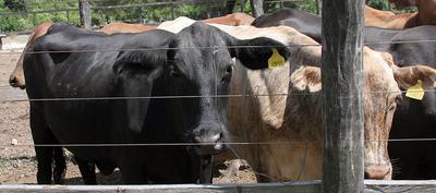Senacsa evalúa aumentar presencia en Alto Paraguay para crecimiento del hato ganadero