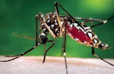 Dengue: si casos siguen en aumento, declararían alerta roja en Santaní