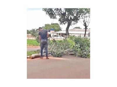 Intervendrán deforestación del intendente de Ypejhú