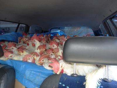 Ventas de productos avícolas nacionales se redujeron en un 40% por contrabando