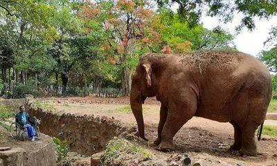 Concejal plantea cierre de Zoológico de Asunción, tras muerte de la elefanta Maia
