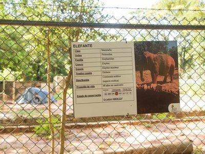 Quieren acabar con el zoológico tras la muerte de Maia