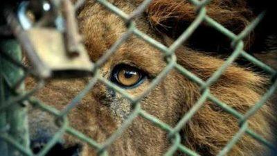 El futuro del zoológico de Asunción