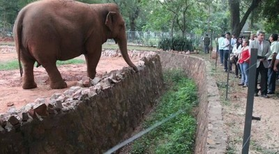 Plantean instalar debate y analizar cierre del zoológico