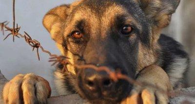 Ahora podrás denunciar maltrato animal a través de la web