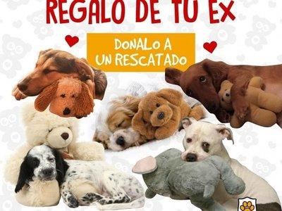 """""""Dale un mejor final al regalo de tu ex"""", la campaña a favor de los perritos"""