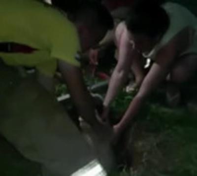 Perrita es rescatada por bomberos tras caer a un pozo ciego