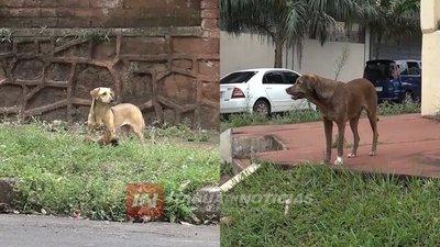 INVITAN A COLECTA PARA RESCATE DE ANIMALES EN SITUACIÓN DE CALLE