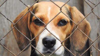 Habilitan página web para denunciar casos de maltrato animal