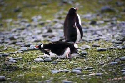 La vida vegetal se abre paso en la Antártida más inhóspita