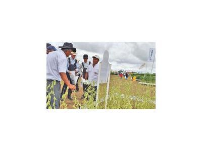 Semillas de soja paraguaya se destacan en Bolivia