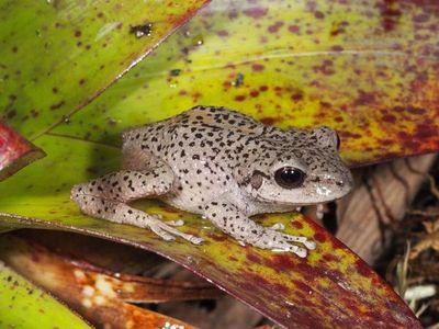 El sur de Ecuador, un paraíso para los anfibios