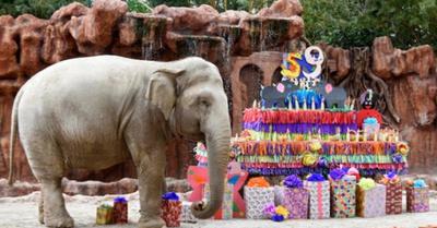 La elefanta Trompita celebra sus 59 añitos