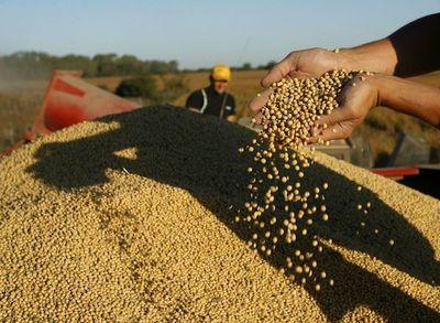 Granos de soja entre las exportaciones menos dinámicas