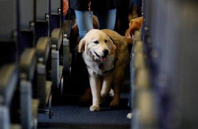 Buscan que mascotas viajen en transporte público con sus dueños