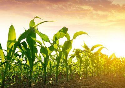 Paraguay produce alimentos para 80 millones de personas con apenas el 0,1% de la emisión mundial de CO2