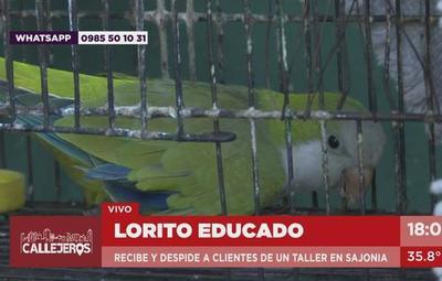 Chiquito, el loro educado de Sajonia