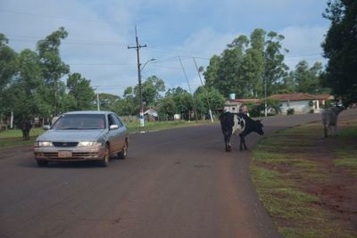 Animales sueltos, peligro en las rutas PY18 y 08
