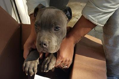 Niño entregó su perrito a un refugio para protegerlo de los maltratos de su padre