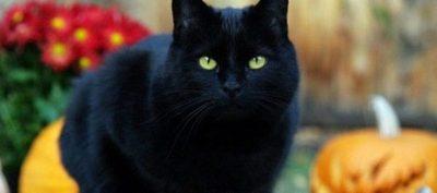 Día mundial del gato: ¿Por qué se celebra tres veces al año?