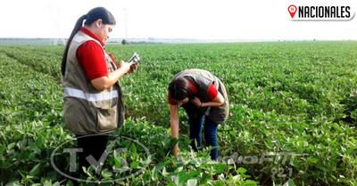 Senave constata baja incidencia de plagas y enfermedades en cultivos de soja