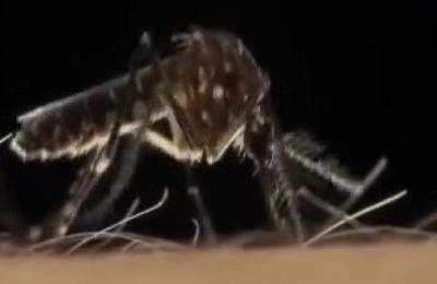 Veinte fallecidos deja brote de dengue en lo que va del año