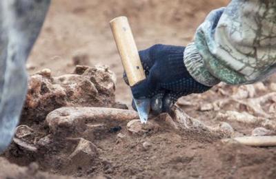 Hallazgo de esqueleto neandertal será clave para estudiar los ritos funerarios