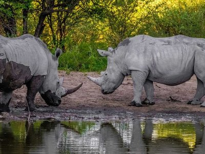 Botsuana, inquieta por el aumento de caza furtiva de rinocerontes
