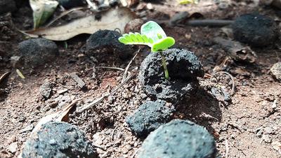 Lanzan unas 140.000 bombas de semillas para reforestar el Ybytyruzú