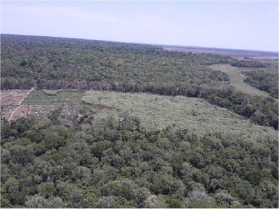 Destruyen alrededor de 200 hectáreas de marihuana en Reserva Morombi