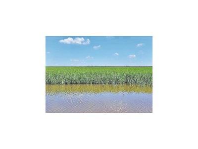 Cultivo de arroz en el Bajo Chaco tuvo exitoso resultado