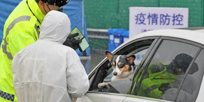 Detectan el posible primer caso de infección de un perro con el nuevo coronavirus
