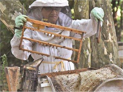 Bajo consumo de miel preocupa al sector apícola