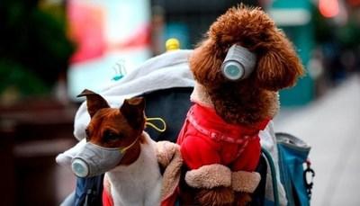 Hong Kong: Confirman que un perro dió positivo al exámen de coronavirus