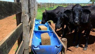 Bloques multinutricionales: una alternativa innovadora y eficaz para alimentar al ganado