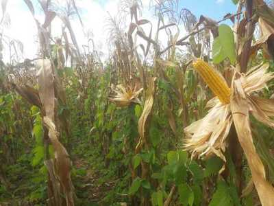 MAG asiste y capacita a productores para lograr mejor rendimiento en varios rubros agrícolas
