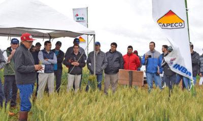 » Novedades y tendencias para el trigo nacional