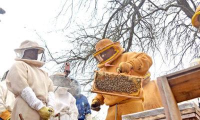 » Buscan llevar la apicultura un nivel superior