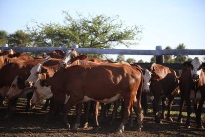 """Varios frigoríficos """"no están pasando precios"""" para la compra de ganado"""