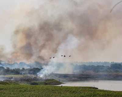 Articulan acciones para evitar propagación de incendios en pastizales
