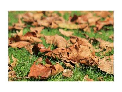 Adiós verano, hola otoño