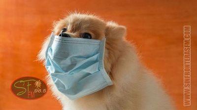 Muere el primer perro diagnosticado con Coronavirus