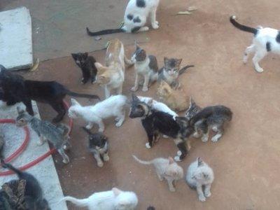 Realizan colecta de balanceados para mascotas de 57 refugios