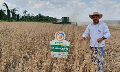 » Variedades de soja paraguaya se destacan en Bolivia